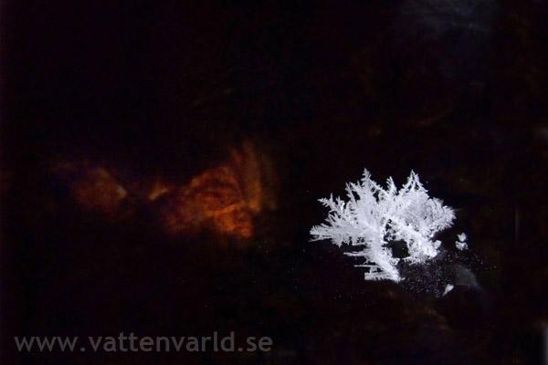Vinterblom